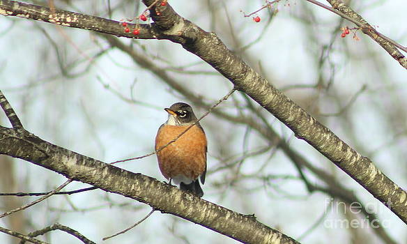 Winter Robin by Ellen Ryan