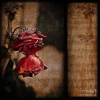 Liz  Alderdice - Winter Roses