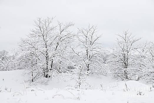 Larry Ricker - Winter Scene
