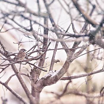 Sophie McAulay - Winter scene with sparrow