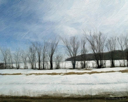 Winter Sentinels by Melody McBride