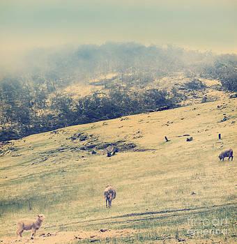 Tim Hester - Winter Sheep Vintage