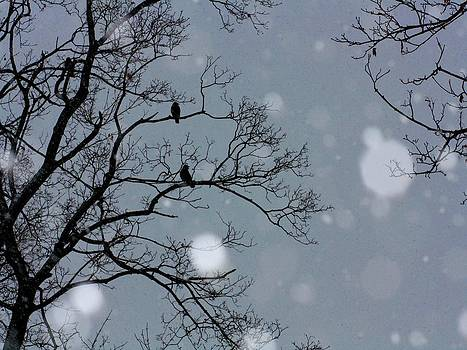 Gothicrow Images - Winter Sky
