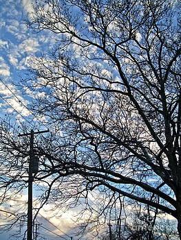 Winter Sky by Linda Zolten Wood