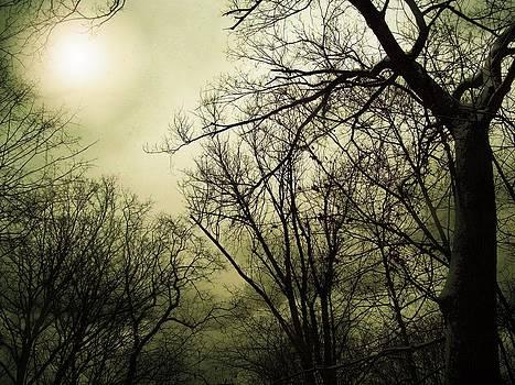 Winter Sky by Sue Midlock