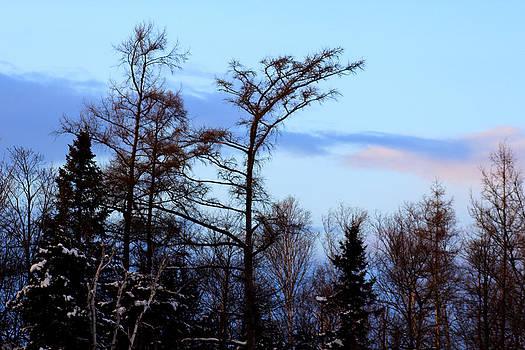 Winter skyline by Sherry Hudson
