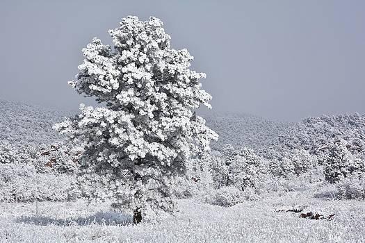 Winter Solitude by Diane Alexander
