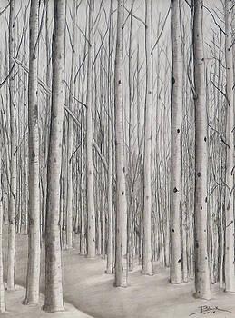 Winter Solitude by Joyce Blank