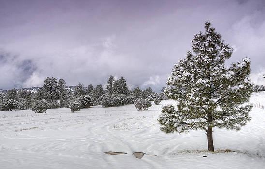 Saija  Lehtonen - Winter Solitude