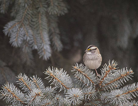 Winter Sparrow by Christina Durity