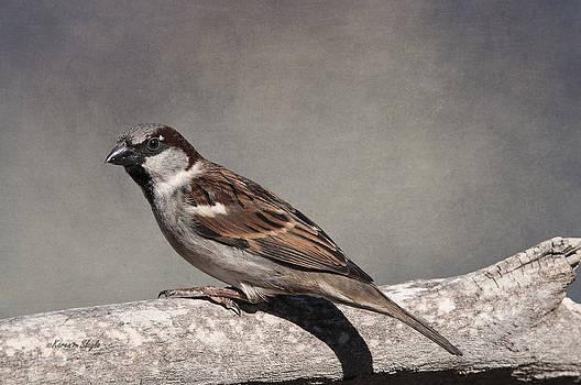 Karen Slagle - Winter Sparrow