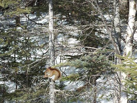 Winter Squirrel by Gene Cyr