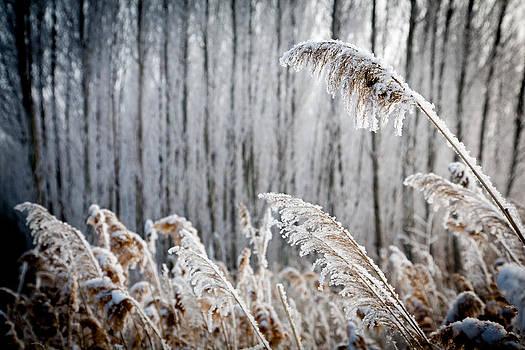 Winter by Stephanus Le Roux