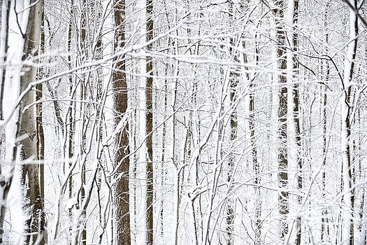 Winter Storm by Laurent Lucuix