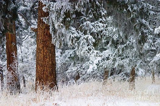 Steve Krull - Winter Storm