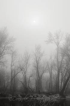 Winter Sun by Dorinda Grever