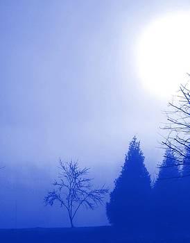 Winter Sun by Pam Clark