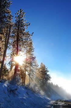 Winter Sunbeam by Dan Quam