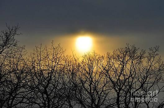 Winter Sunset II by D Nigon