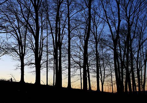 Winter Sunset by Jane Eleanor Nicholas
