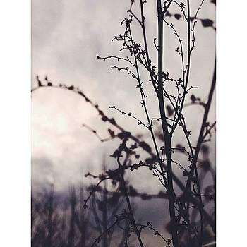 Winter Sunset. #vsco #vscocam by Nathan Sears