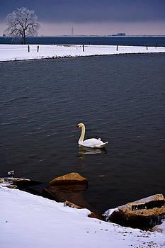 Winter Swim by Micah McKinnon