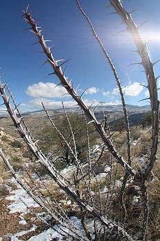 Winter Thorns by David S Reynolds
