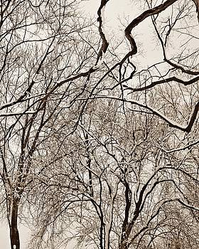 Chris Berry - Winter Tree Abstract