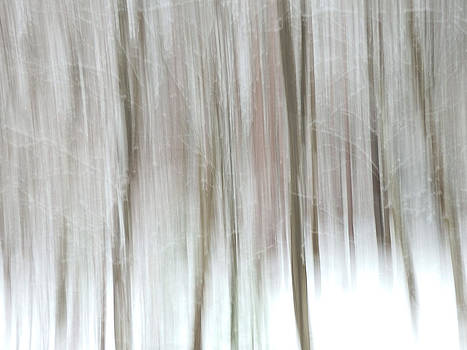 Winter Tree Abstract by Nancy De Flon