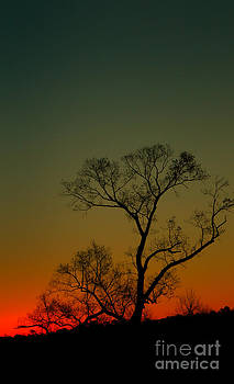 Dave Bosse - Winter Tree at Sunset
