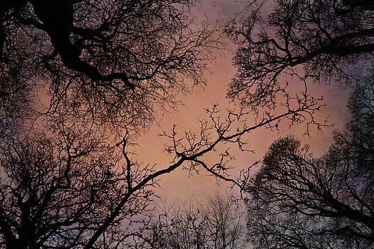 David Pringle - Winter Tree Canopy