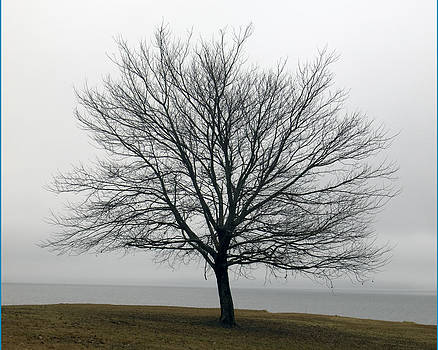Winter Tree by Ed Cooper