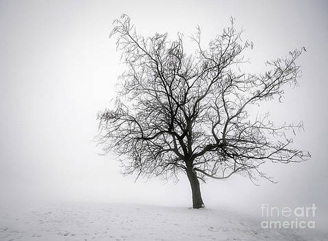Elena Elisseeva - Winter tree in fog