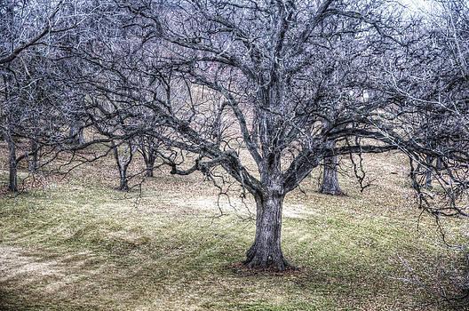 Winter Tree by Jay Swisher