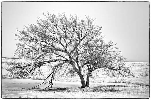 Winter tree by Joenne Hartley