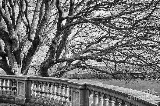 Kate McKenna - Winter Tree