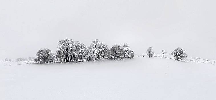 Julie Dant - Winter Tree Line in Indiana