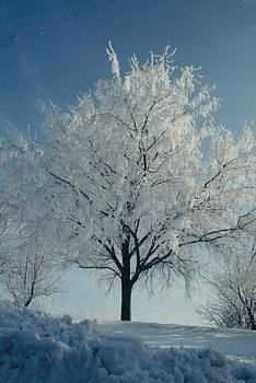 Winter Tree by Patrick Murphy