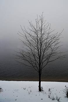 Randal Bruck - Winter Tree