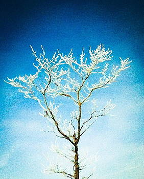 Winter Tree Series 1 by Melany Raubolt