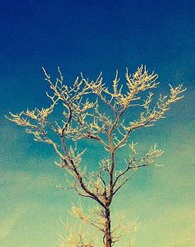 Winter Tree Series 2 by Melany Raubolt