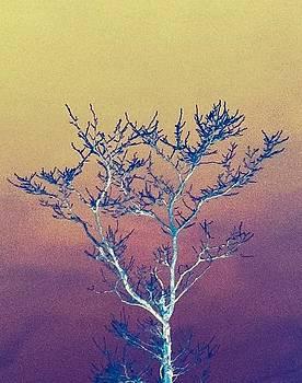 Winter Tree Series 3 by Melany Raubolt