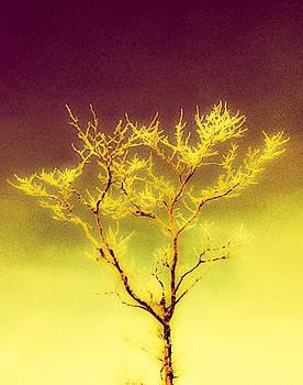 Winter Tree Series 5 by Melany Raubolt