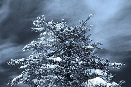 Winter Tree Top by Katina Borges