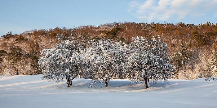 Winter Trees by Adam Caron