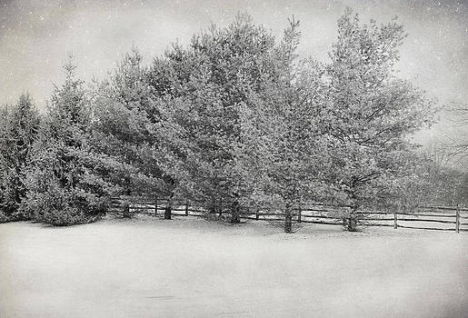 Winter Trees At Meadow Breeze by Pat Abbott