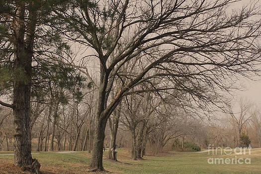 Winter Trees by Barbara Dean