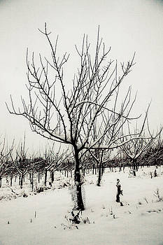 Winter Trees by Dawn Bowery