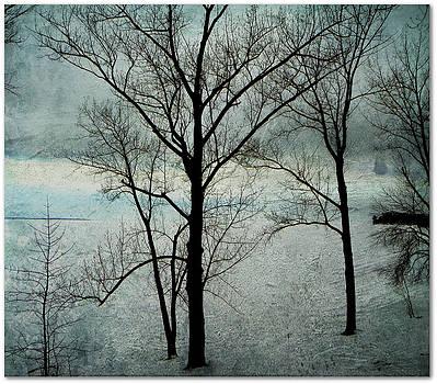 Winter Trees by Dianne  Lacourciere