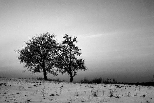 Winter Trees by Tomasz Dziubinski
